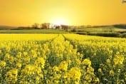 Wnioski w programie Agroenergia