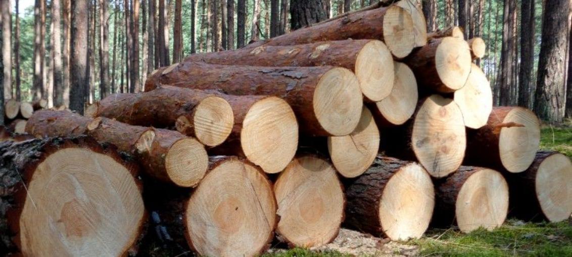 protest branży drzewnej
