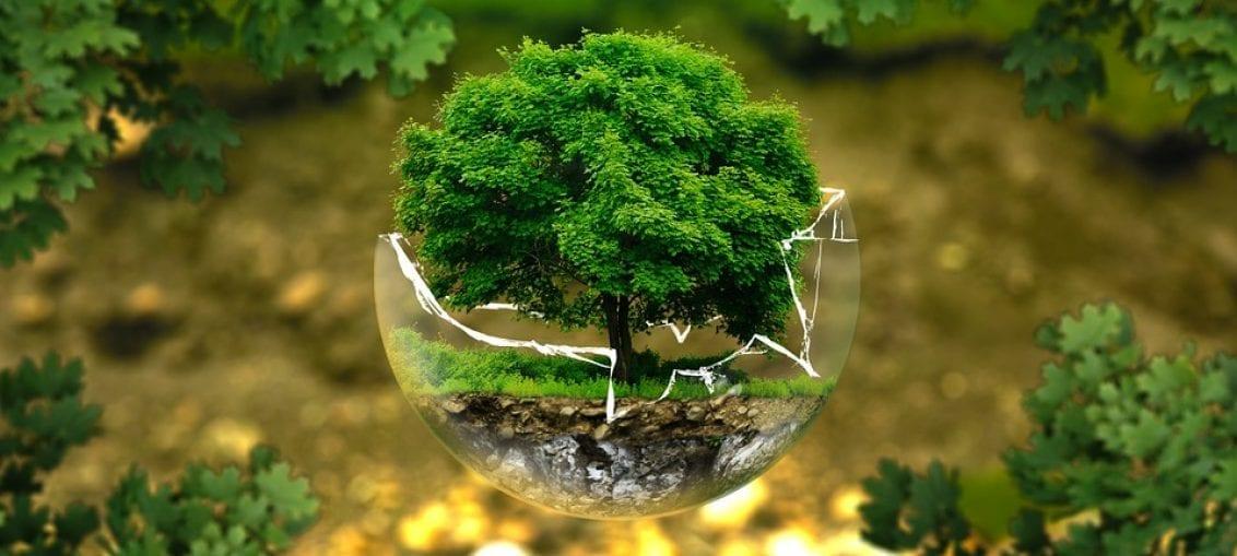 Świadomość ekologiczna