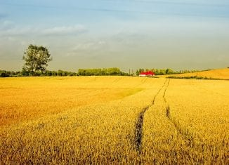 Program Agroenergia