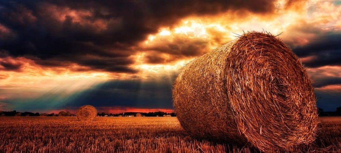 biomasa zastosowanie