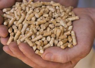 Normy jakości dla pelletu