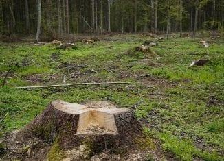 Spalanie drewna w elektrowniach dobre dla środowiska?