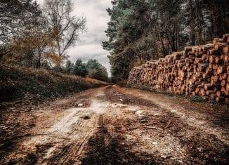list koalicji ministrów lasy