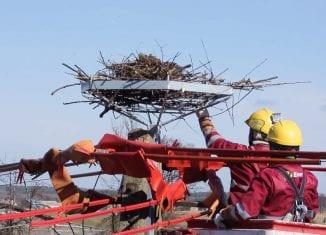 Nowe gniazda dla bocianów