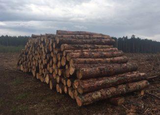 petycja przeciw eksportowi drewna