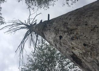 nieuznawanie biomasy leśnej