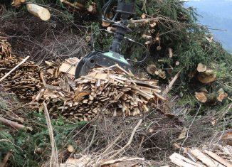 rynek biomasy