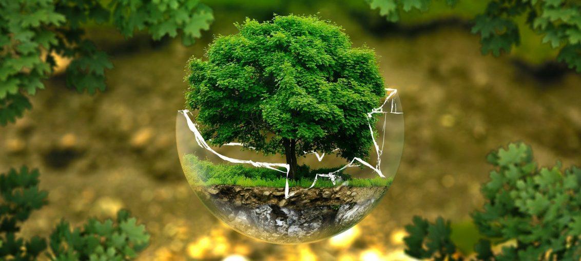 """akcja """"Łączą nas Drzewa"""""""