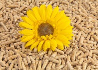 Dynamika rozwoju branży pelletu