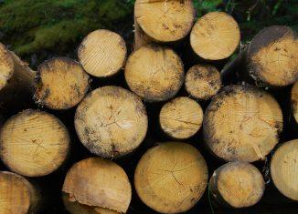 pilarki do drewna kontrola