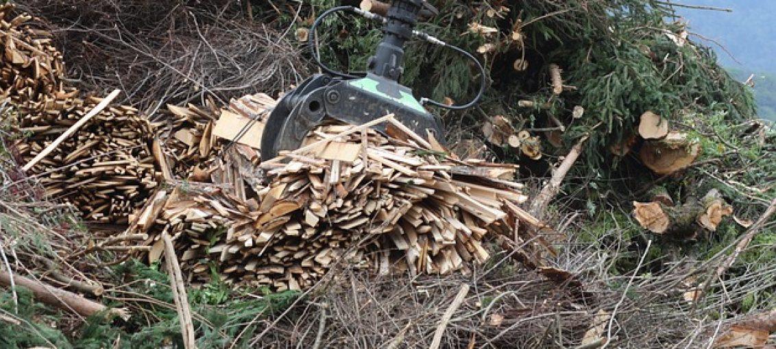 Wsparcie dla producentów energii z biomasy
