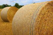 inwestycja biomasowa